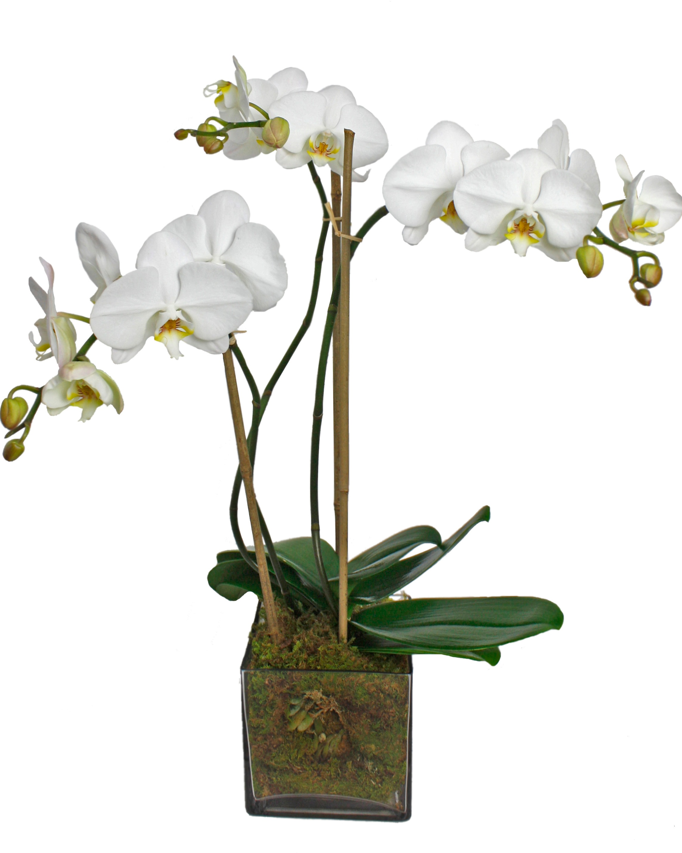 Exquisite Orchid $100-$250 -
