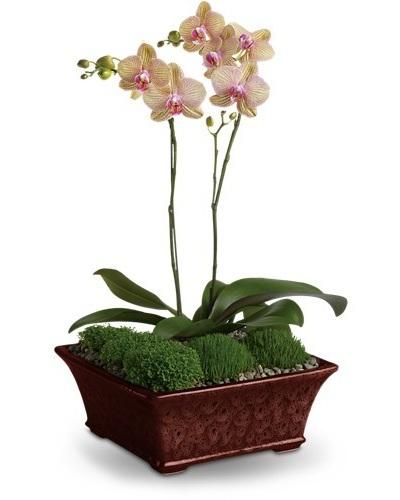 Divine Orchid $90 -