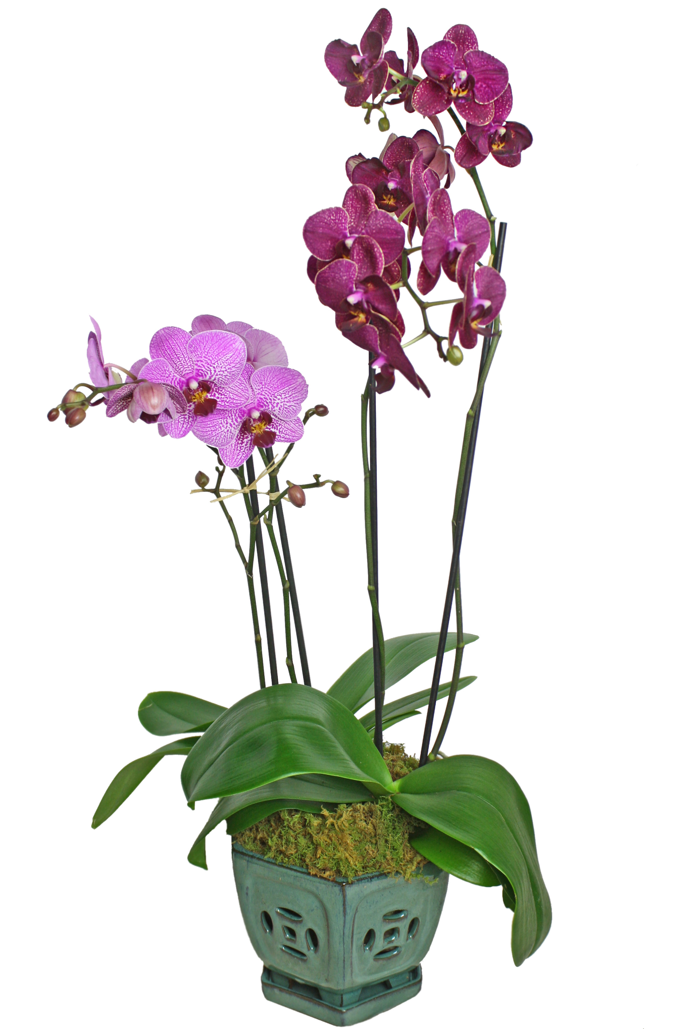 Colorful Orchid Display $120 -