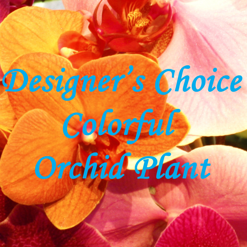 Designer's Choice Colorful Orchid Plant $65-$140 -
