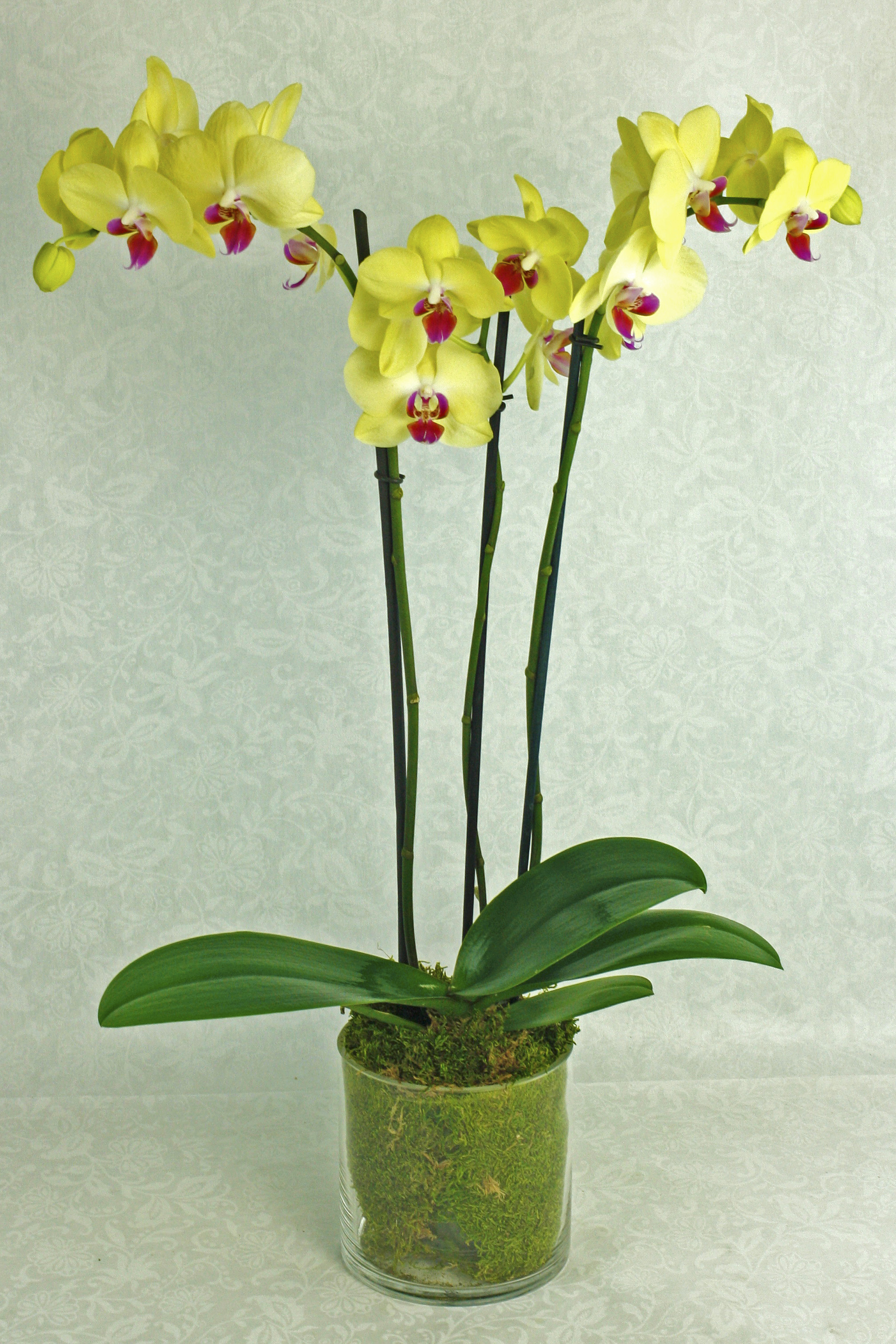 Orchid Plant In Glass $75-$200 -