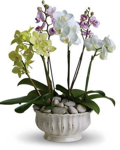 Regal Orchids $170 -