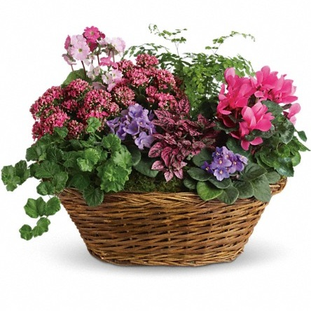 Simply Chic Mixed Plant Basket $75 -