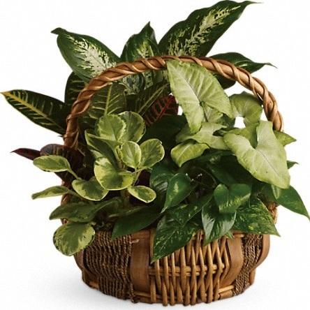 Emerald Garden Basket $60-$90 -