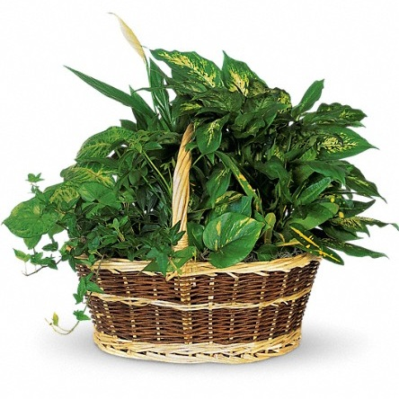 Large Garden Basket $85-$125 -
