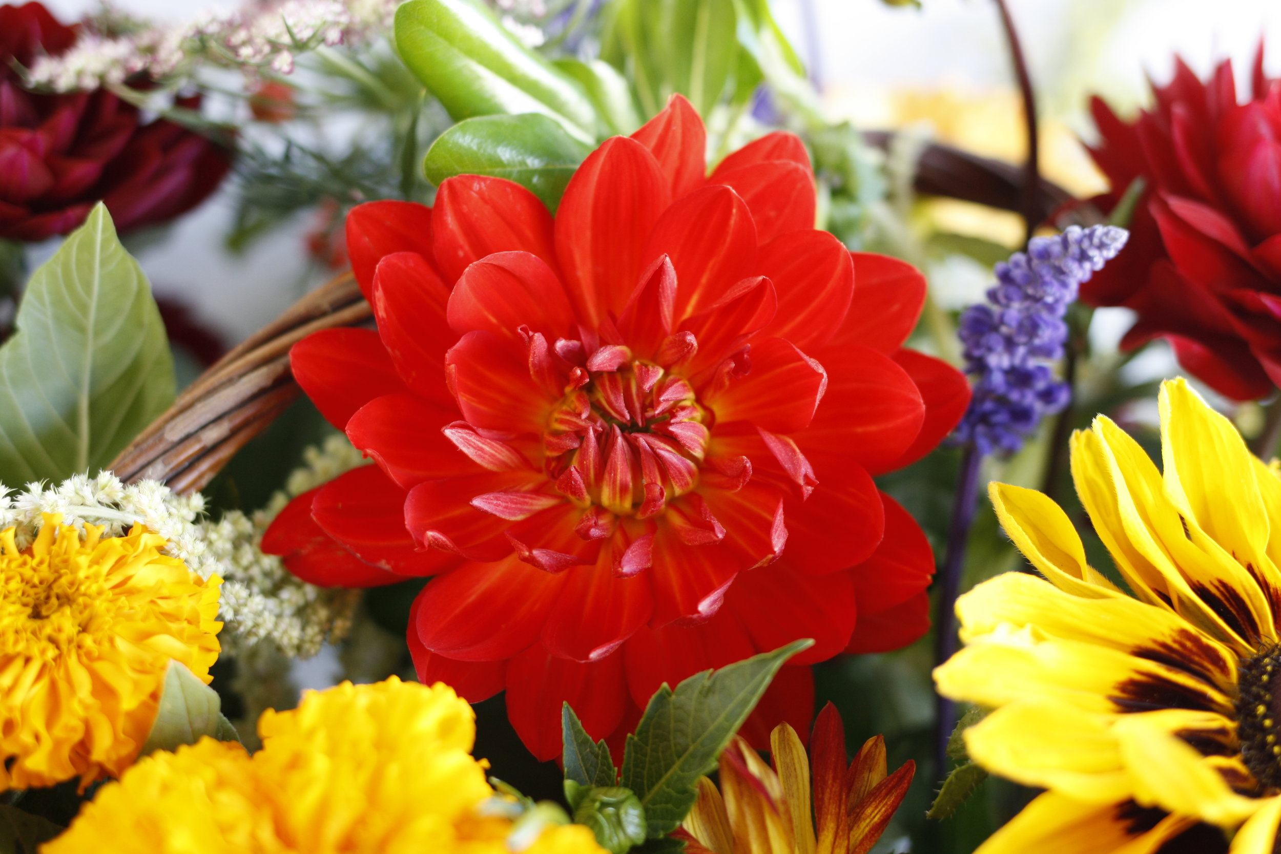 Local Dahlia from Van Dyke Farms