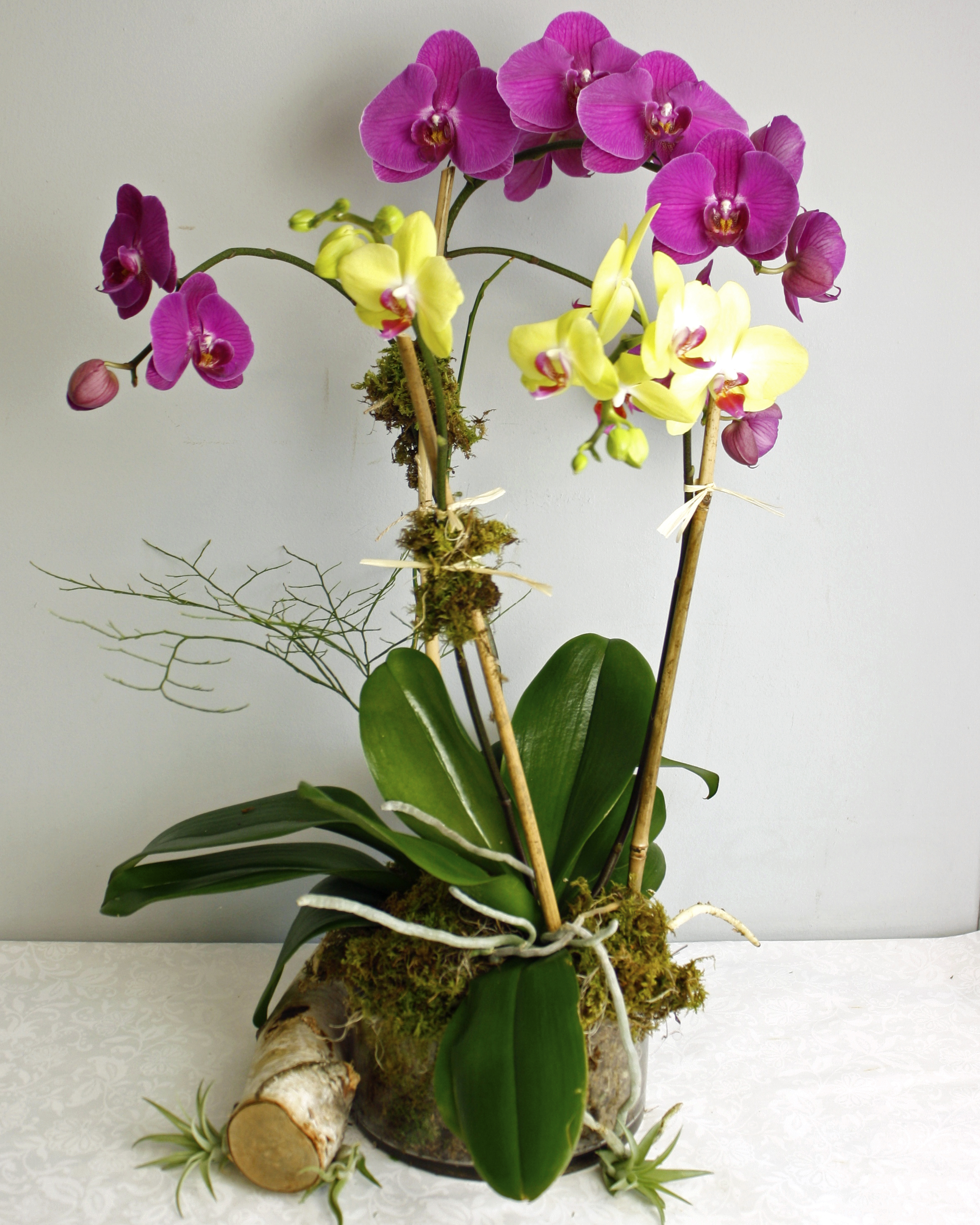 Orchid Flair $150-$290 -