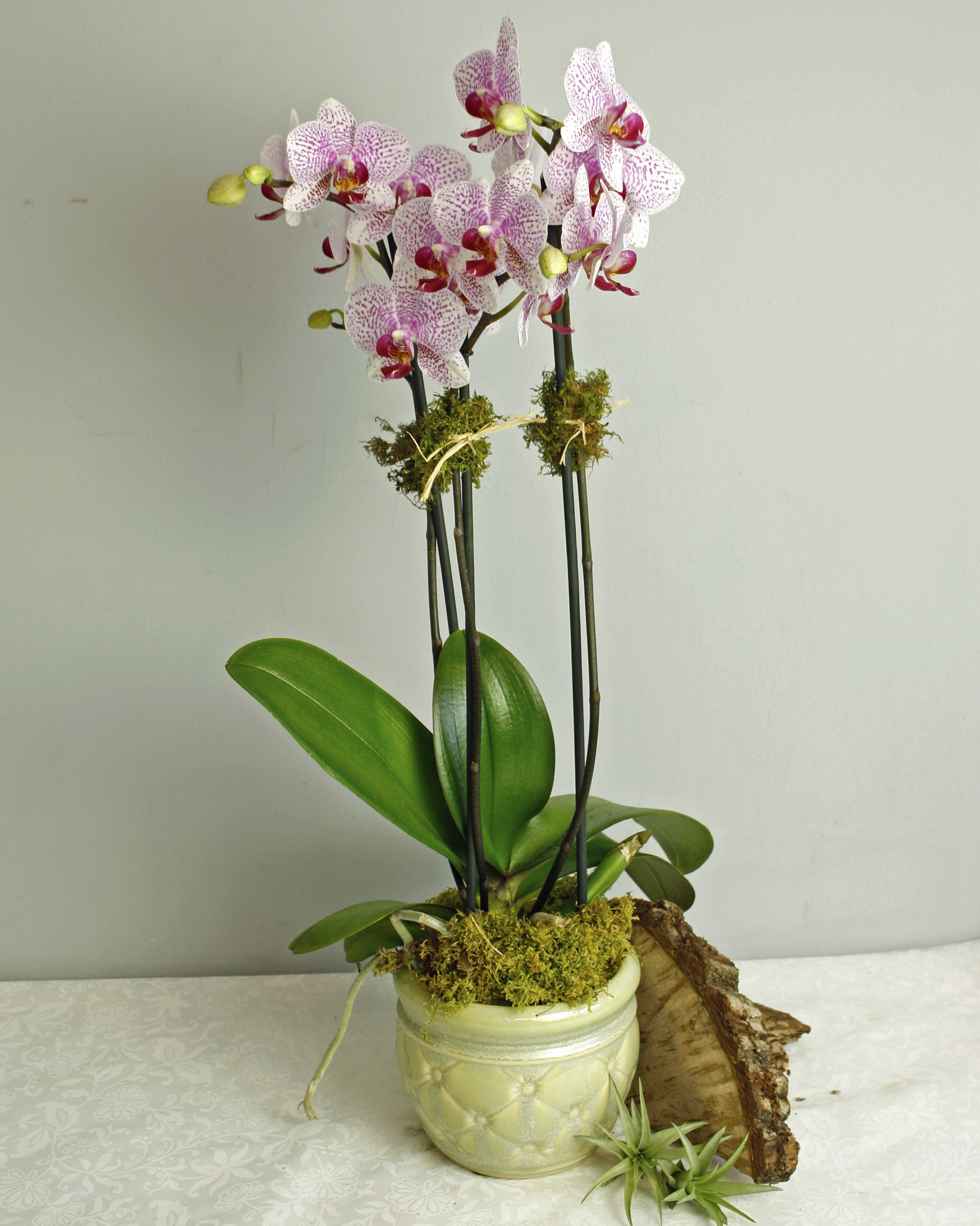 French Orchid $75-$205 -