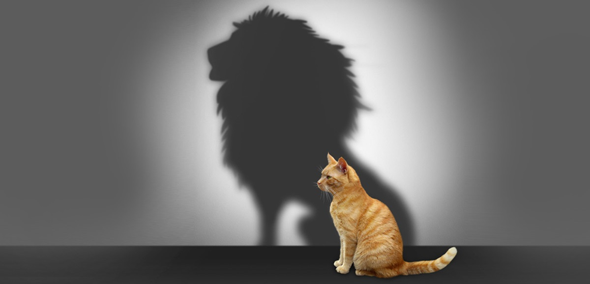 cat-lion-shadow-fb.jpg