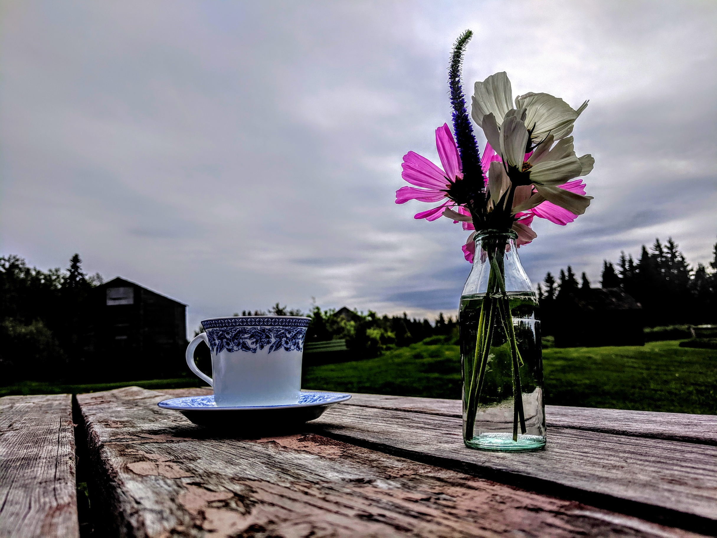 tea in the garden 2019LW1.jpg