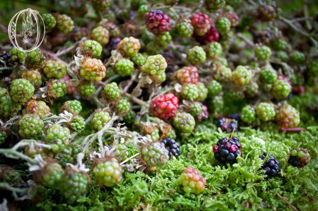 Dutch-Rasberries-Moss-Detail-Oleander-NJ-Bucks-Wedding-Florist