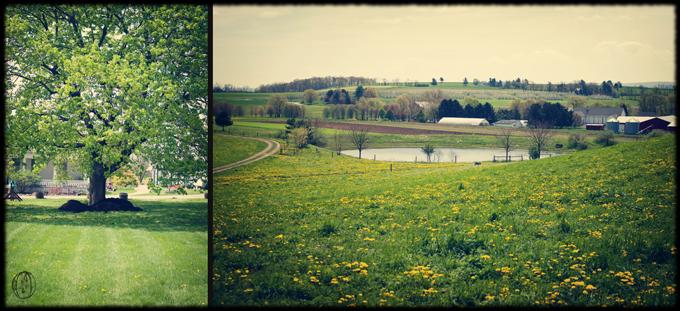Rodale-Institute-Organic-Farm-Hilltop-View-Red-Stone-Barn-Lake-Rustic-Wedding-Venue-Oleander-Bucks-County-New-Jersey-Wedding-Florist-Event-Floral-Design