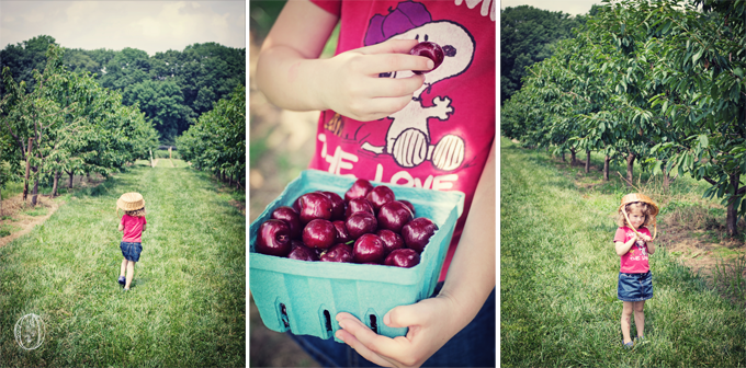 Summer-Bucks-County-PA-Farm-Wedding-Orchard-Cherry-Blueberry-Picking-Rustic-Vintage-Picnic-Wedding-Oleander-NJ-Bucks-County-PA-Wedding-Florist-Event-Floral-Design