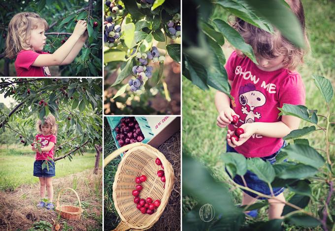 Summer-Bucks-County-PA-Farm-Wedding-Orchard-Cherry-Picking-Rustic-Vintage-Picnic-Wedding-Oleander-NJ-Bucks-County-PA-Wedding-Florist-Event-Floral-Design