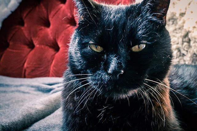 Happy International Cat Day from Midnight the cat! He was a rescue kitty! #adoptdontstop