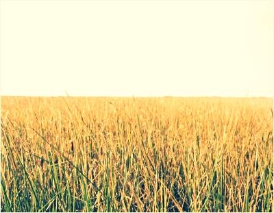 Yellow Grass Field, Chromogenic Print by Karen Bell