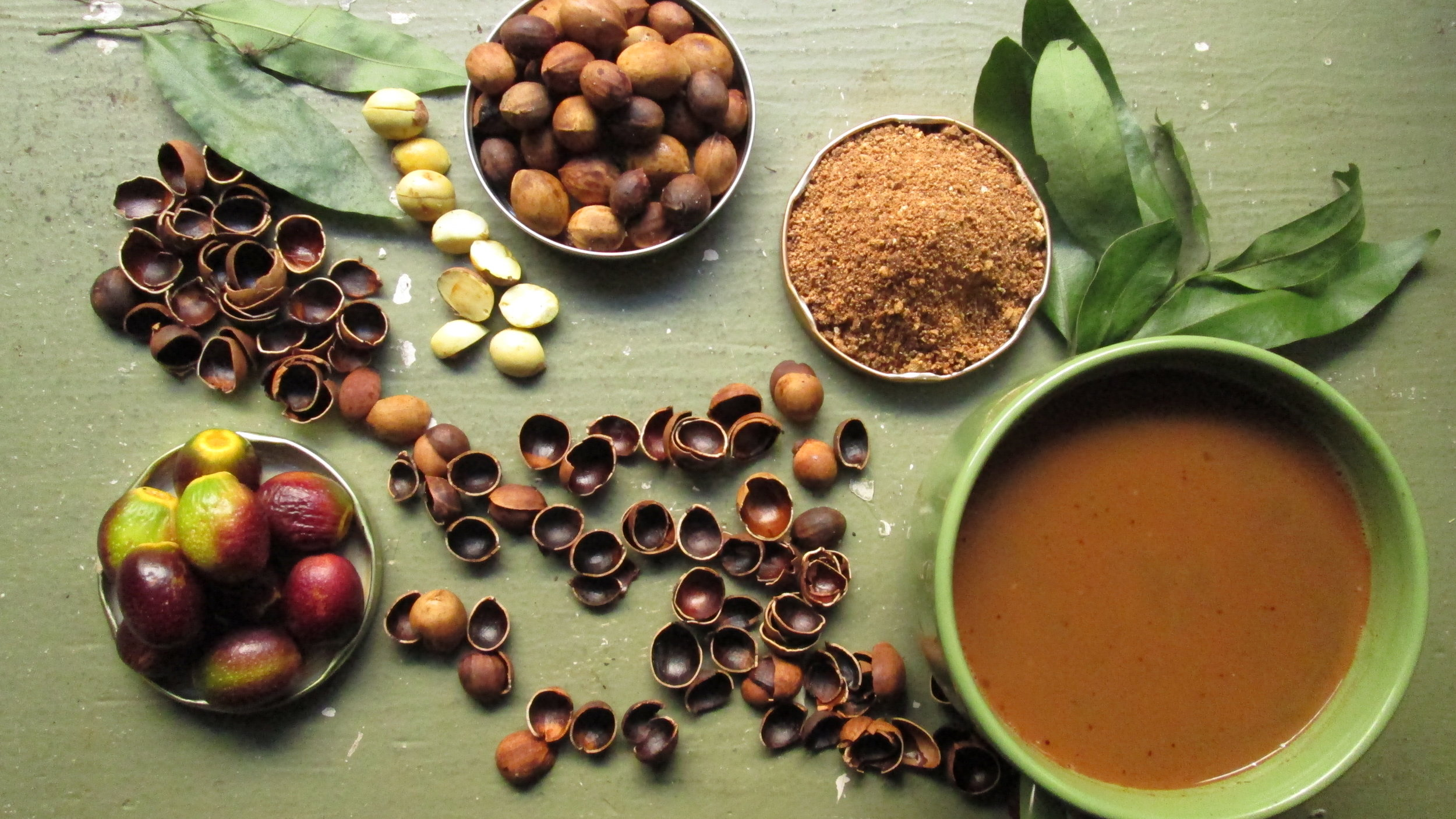 Clockwise starting from the lower left: ripe bay fruits; shelled hulls of bay nut; unroasted, shelled bay nuts; bay leaves; roasted bay nuts; bay nut powder; drink made by steeping bay nut powder in hot water. (Photo by Emily Moskal)  http://baynature.org/article/how-to-forage-and-prepare-bay-nuts/