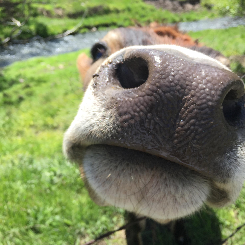 Ferdinand nose .jpeg