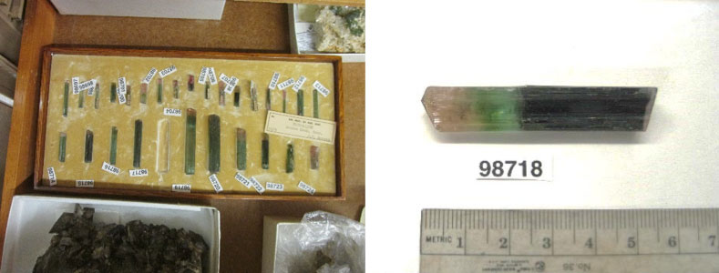 The missing specimen  is a single-crystal of elbaite measuring 5.6 x 1.1 x 0.9 cm with a green body and red-pink termination. A paper label with the catalog number 98718 was glued to the crystal.