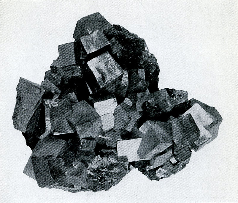 Galena from Galena, Ill.  Clearly defined cubic crystals which were deposited on the walls of an open vein, the galena being the last mineral to form in the vein.