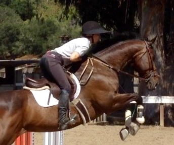 Rayne - 2006 TB mare. Has competed up to 1.20m. Light and sensitive on the flat with a phenomenal jump.Offered on broodmare lease only.