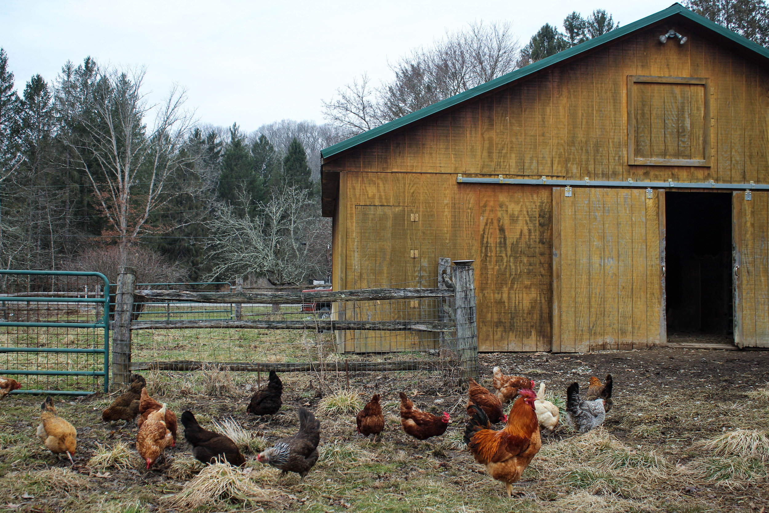 Chicken 2.23-4.jpg