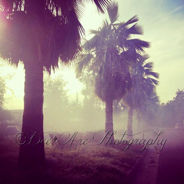 Misty Palm Trees.jpg