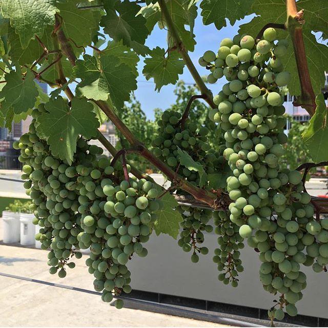 Happy wine Wednesday 😍🍷how are you celebrating? 📷: @crenergydesign