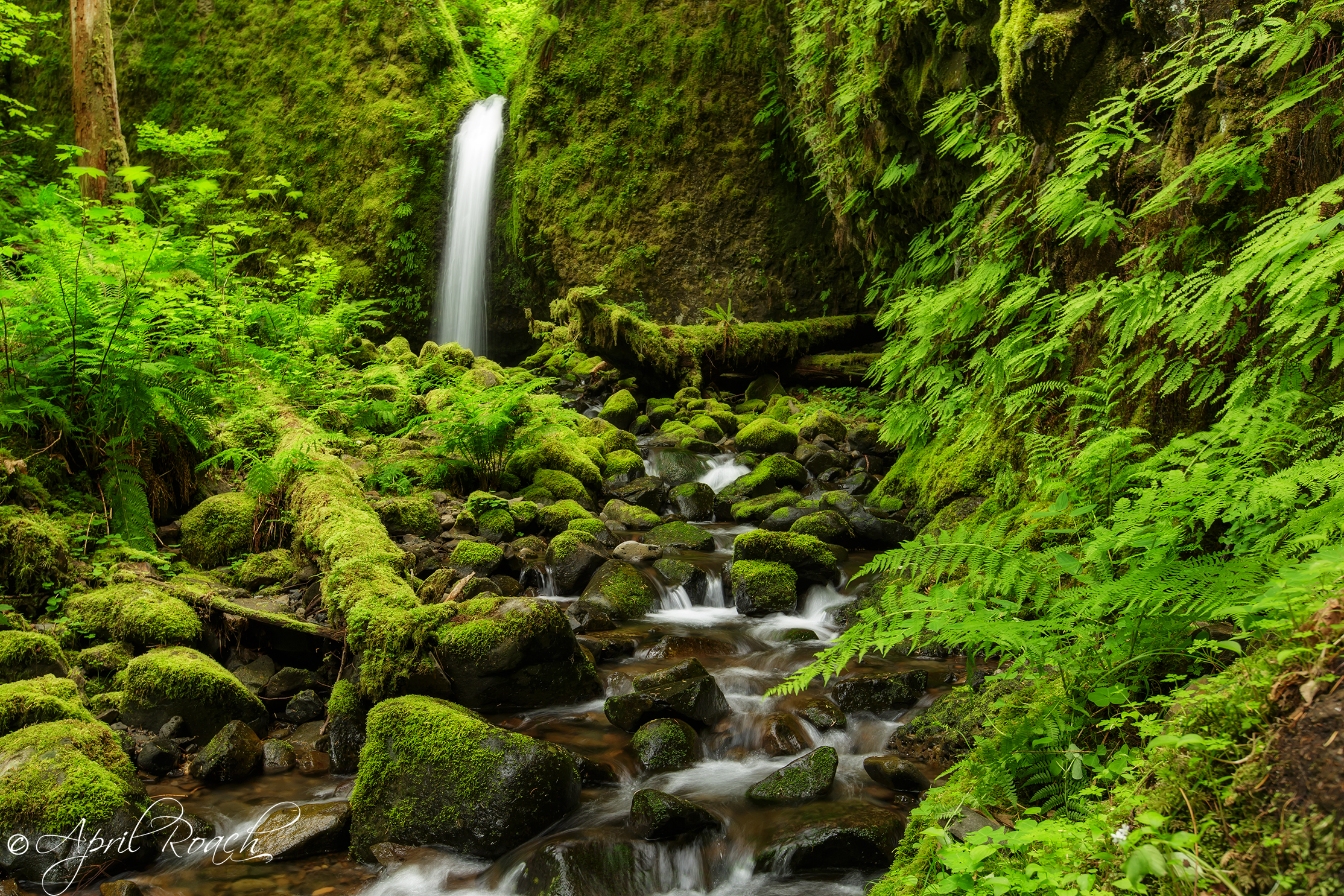 The elusive and mysterious Mossy Grotto Falls, Columbia River Gorge, Oregon