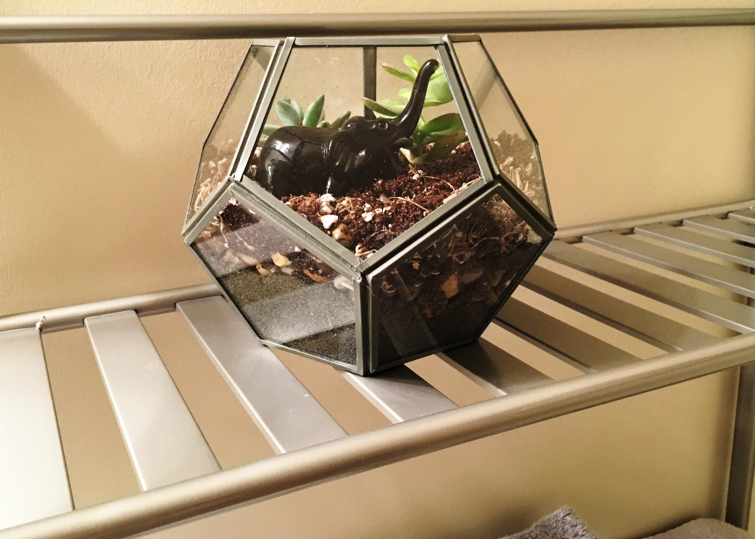 sam-c-perry-how-to-make-your-own-terrarium-final.jpg