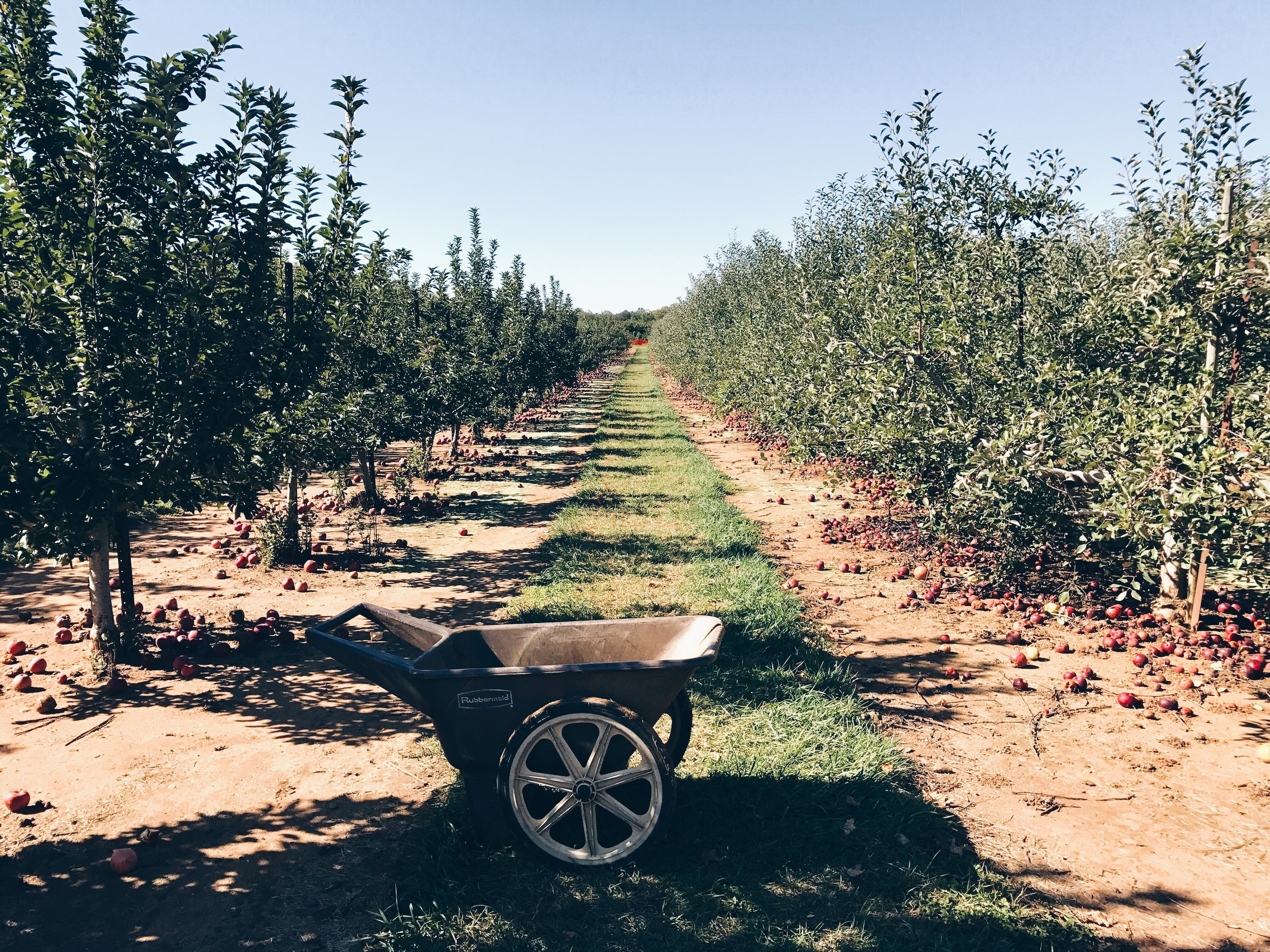 sam-c-perry-apple-and-pumpkin-picking-delicious-orchards-apple-tart.cart.jpg
