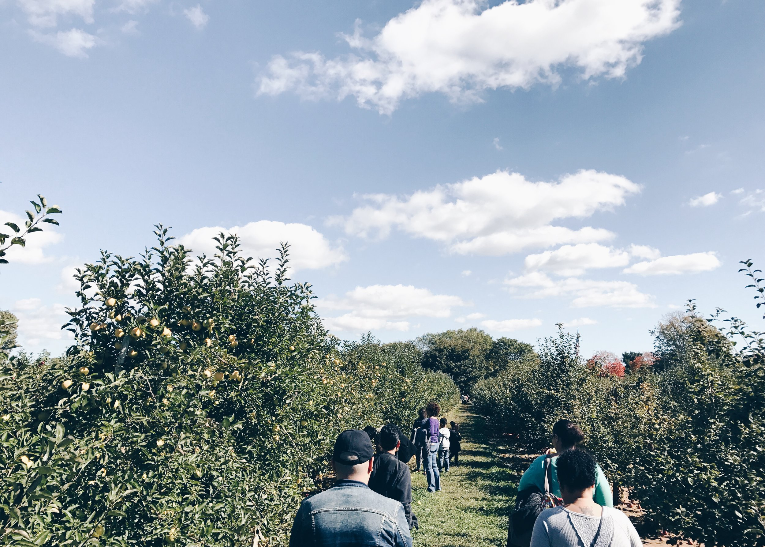 sam-c-perry-apple-and-pumpkin-picking-delicious-orchards-apple-tart-family1.jpg