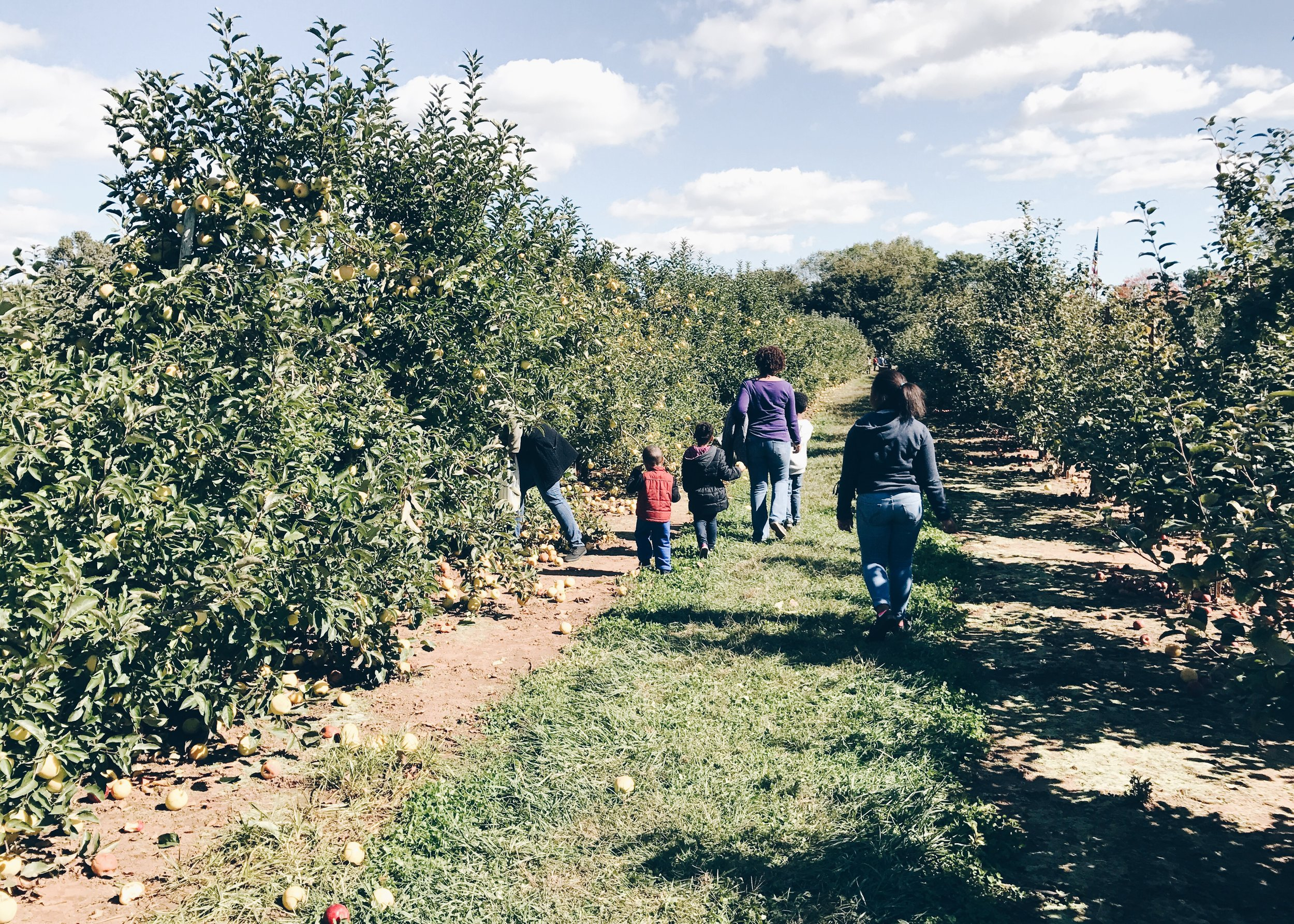 sam-c-perry-apple-and-pumpkin-picking-delicious-orchards-apple-tart-family.jpg