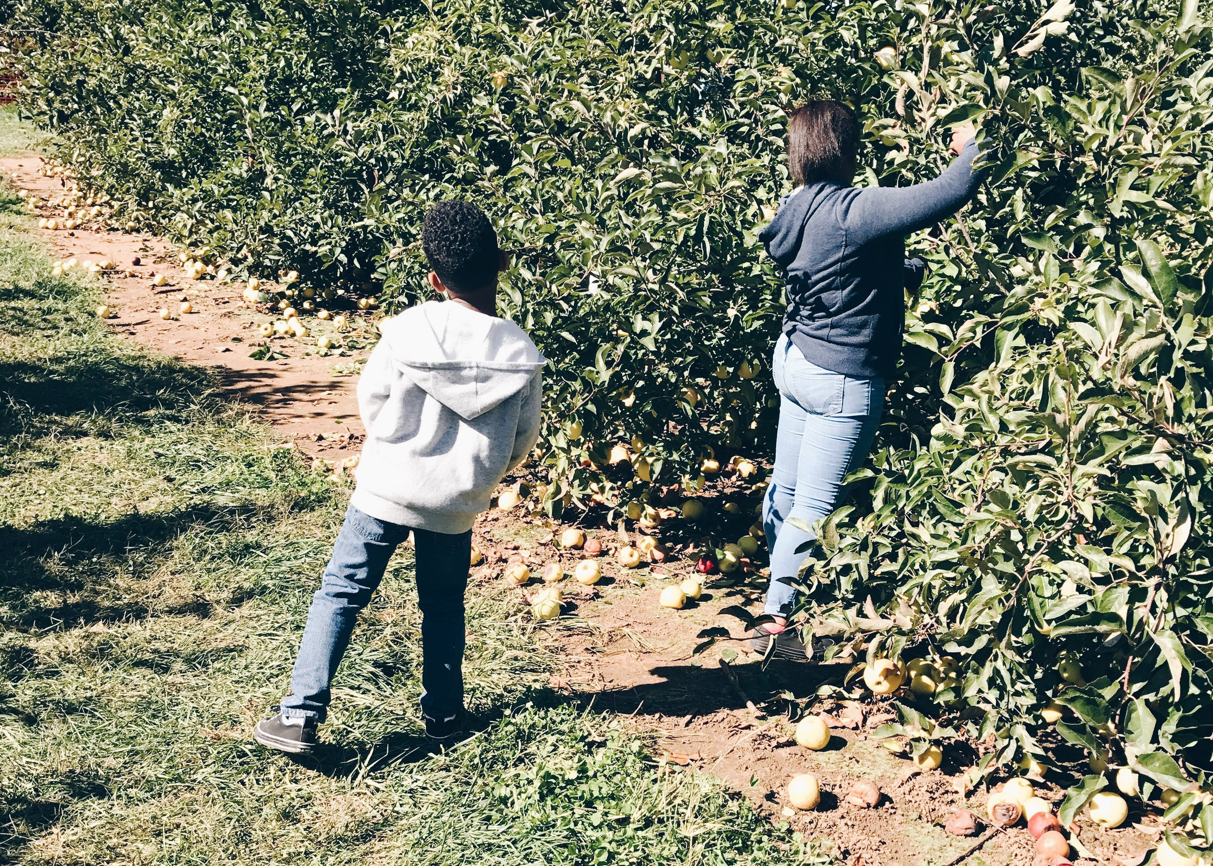 sam-c-perry-apple-and-pumpkin-picking-delicious-orchards-apple-tart-kids.jpg
