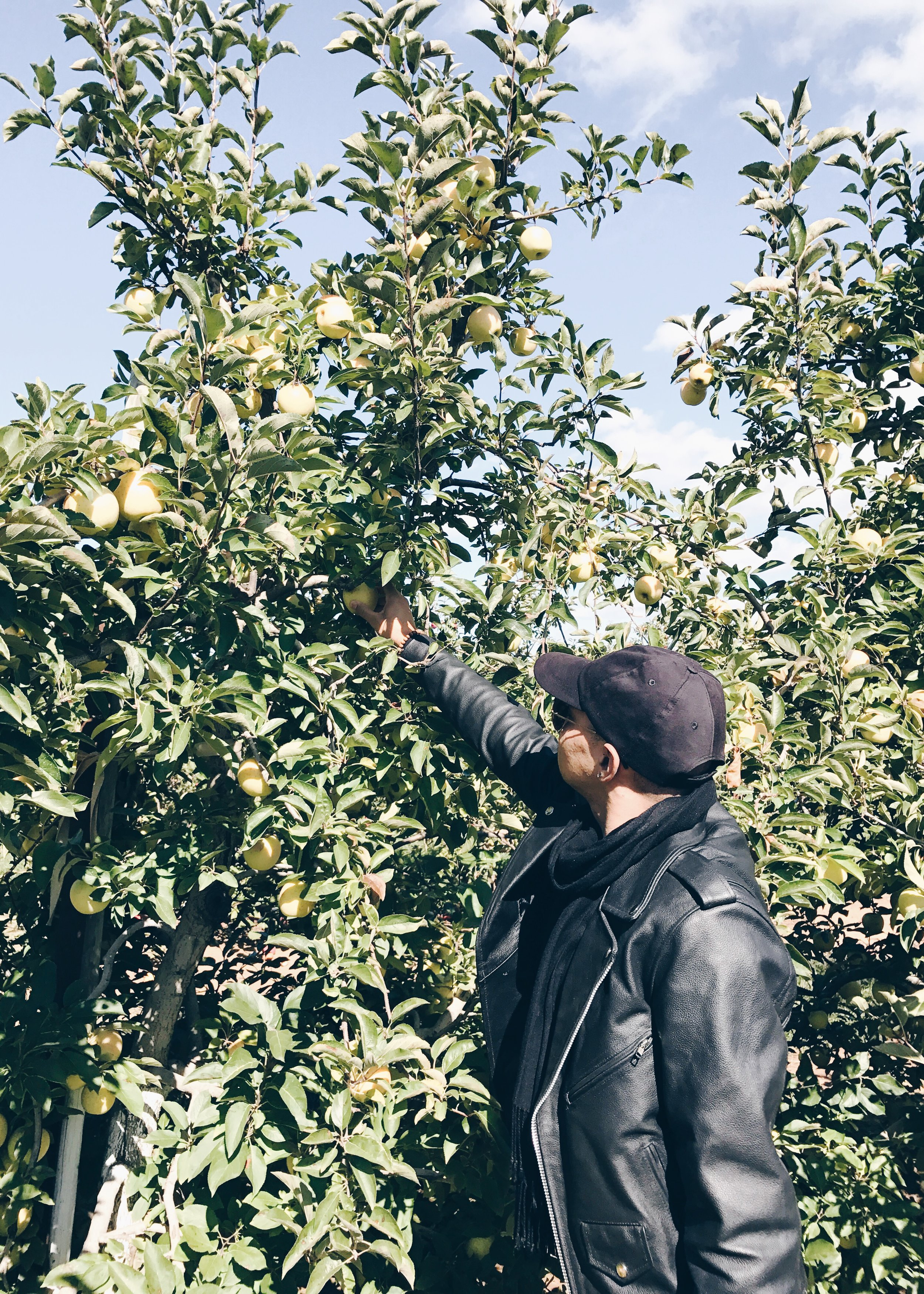sam-c-perry-apple-and-pumpkin-picking-delicious-orchards-apple-tart-picking.jpg
