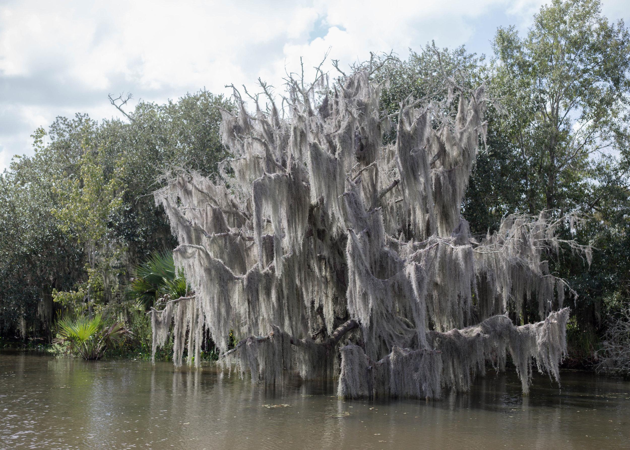 new-orleans-alligator-tour.jpg