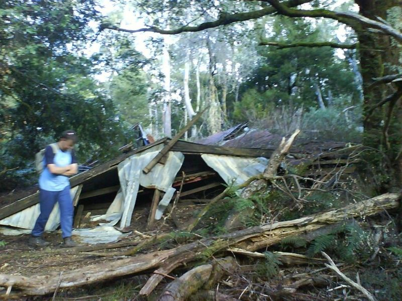 The ruin of the SCV cabin amongst myrtle beech trees on the main walking track between 10 Mile and the summit. Photo circa 2006. © David Sisson.