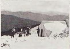 Razorback Hut. Photo Roy Weston, circa 1931.