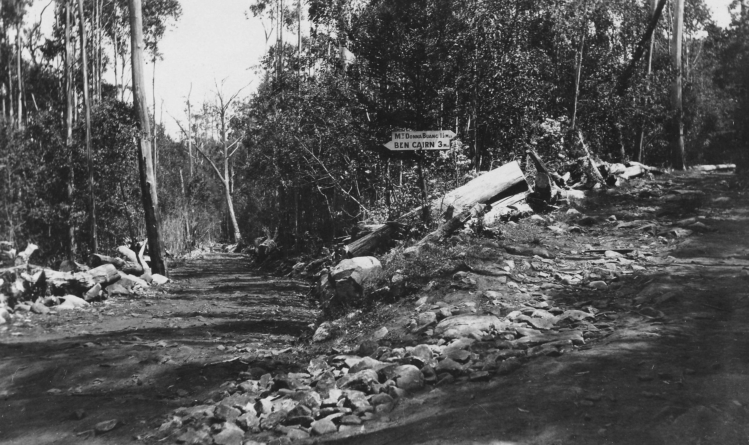 The Donna Buang summit - Ben Cairn road junction in the 1926.