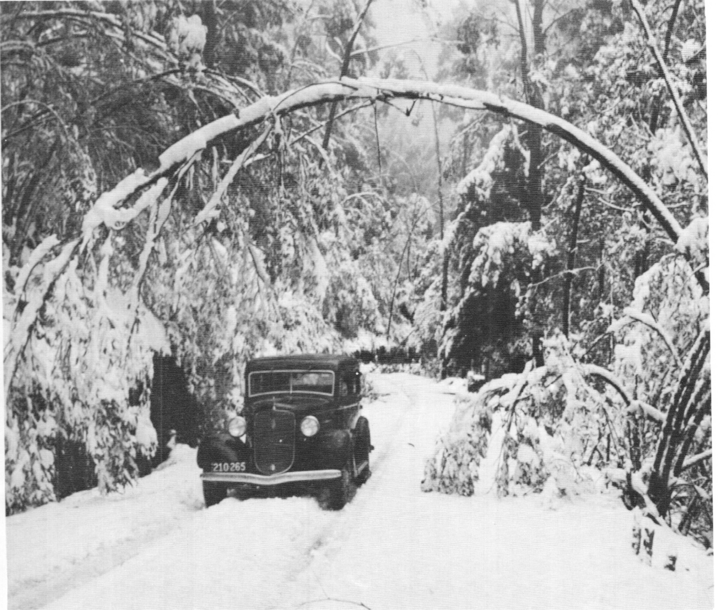 A 1930s Plymouth car on the road to Donna. Photo USC.