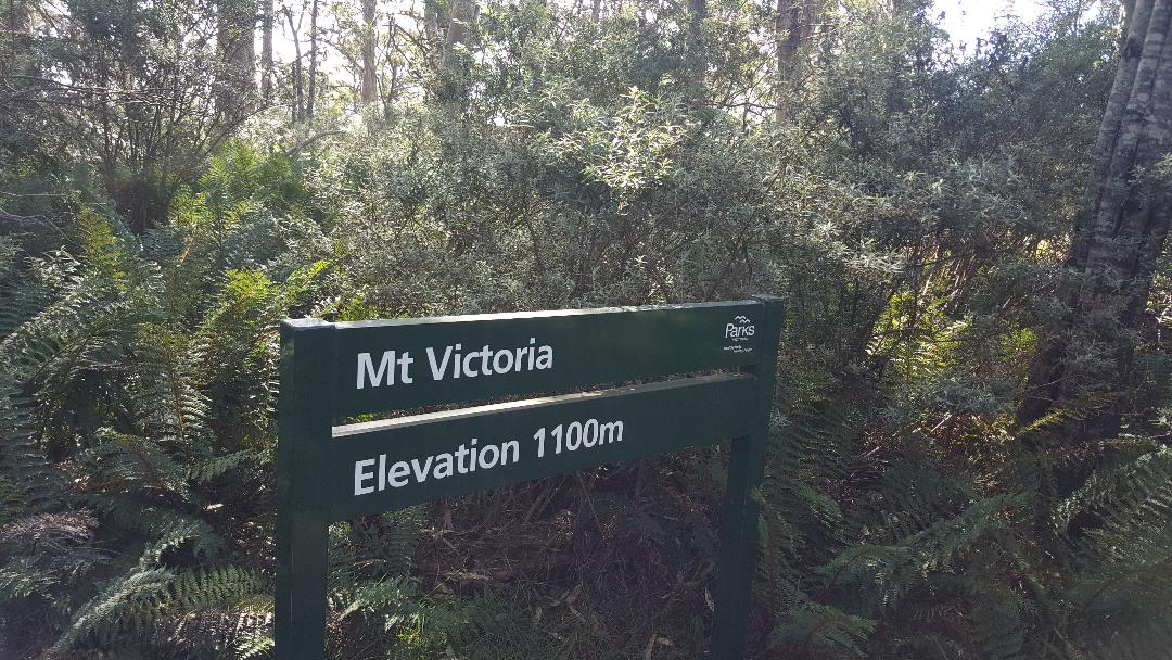 The unimpressive 'summit' of Mt Victoria. © 2019.