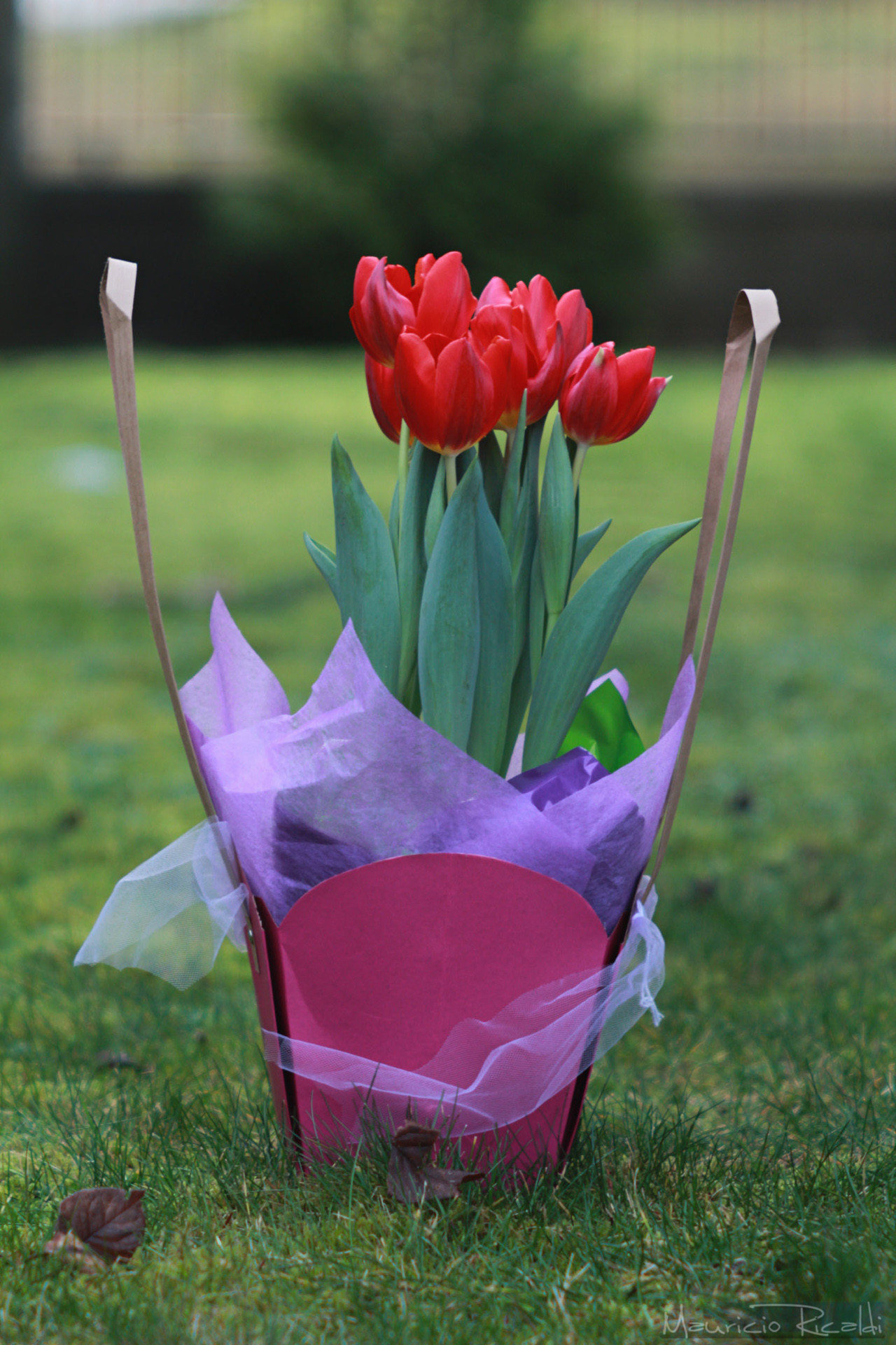 tulipanes1.jpg