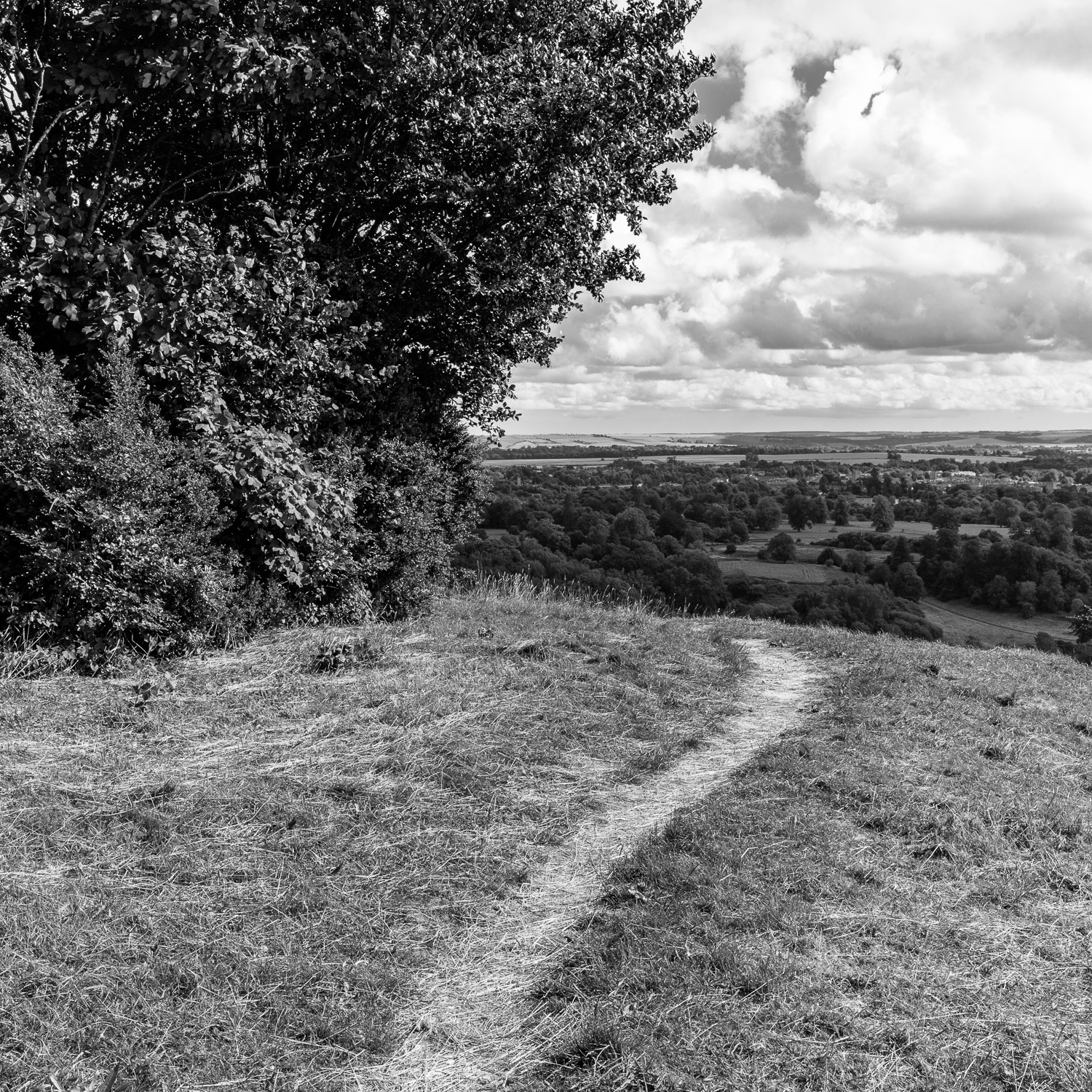 Path on Roundway Hill