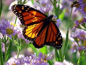 Butterflycenteringprayer.jpg