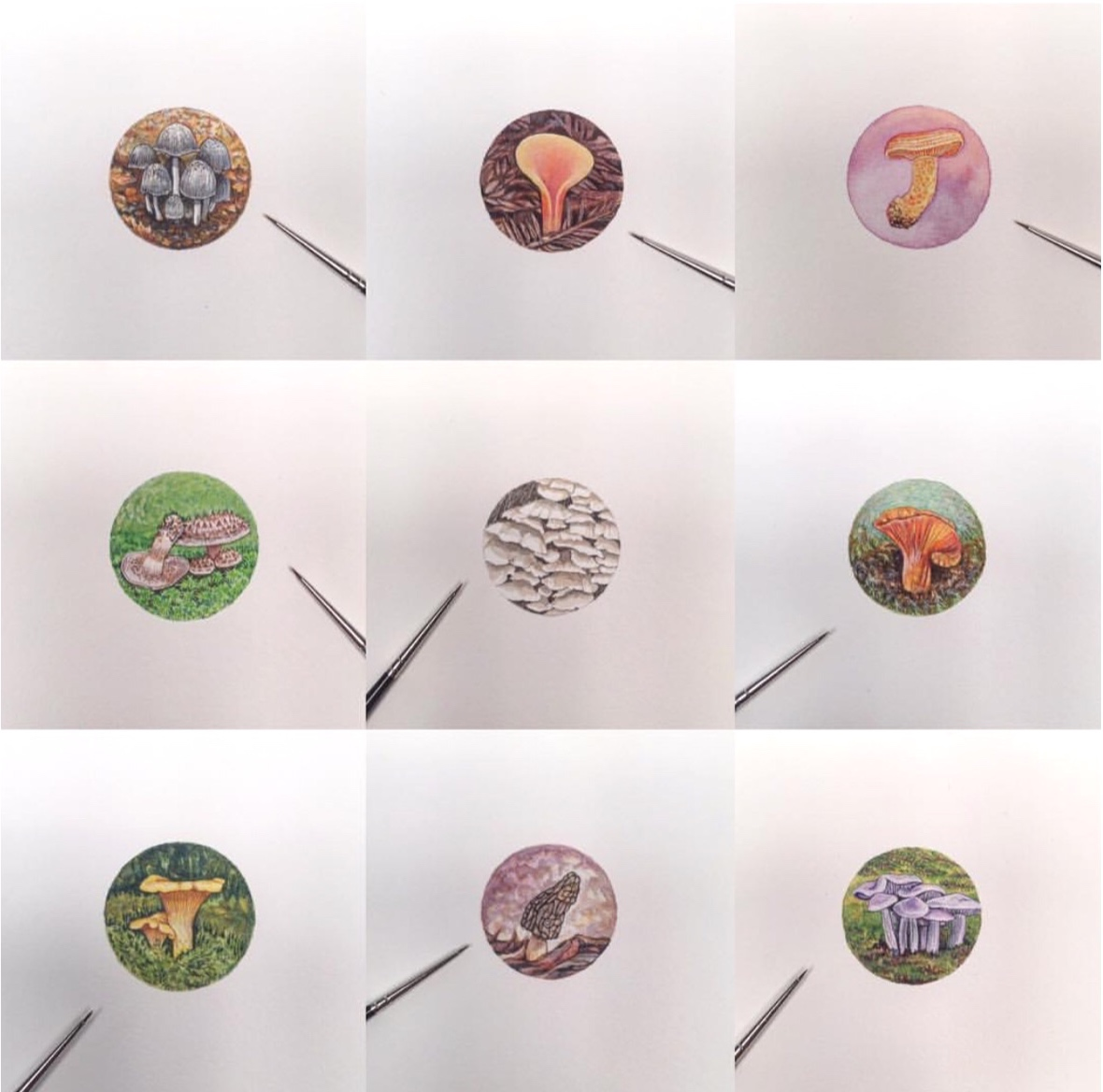 A collection of mushroom miniature paintings by Brooke Rothshank, instagram @blrothshank