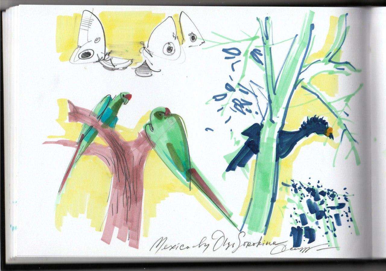 Xcaret Mexico Birds
