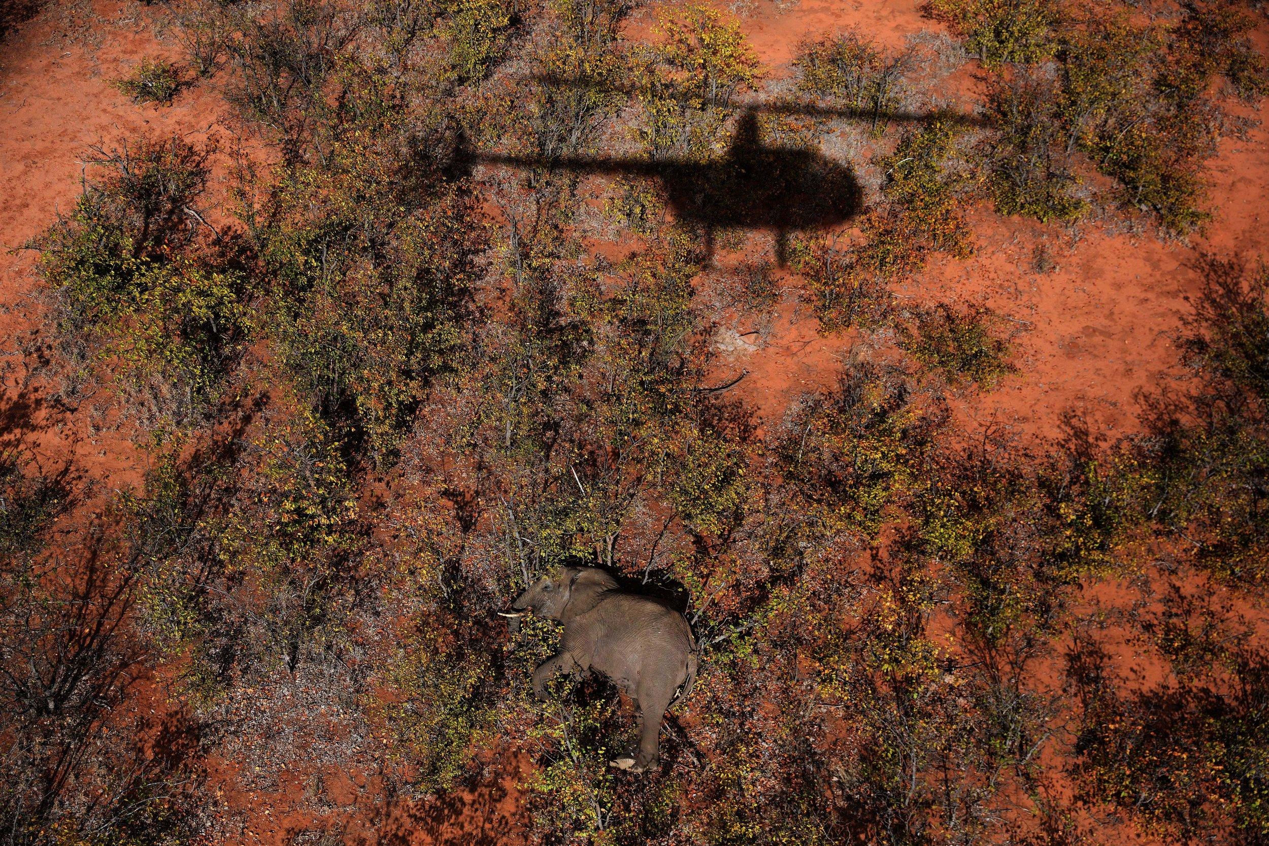 ElephantXweb.jpg