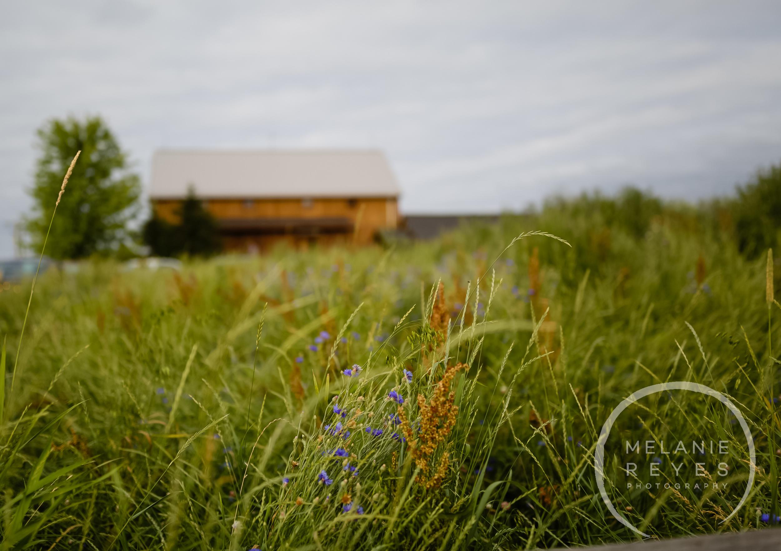 melaniereyesphotography_fruitg_farm_Misty-farm_wedding-8.jpg
