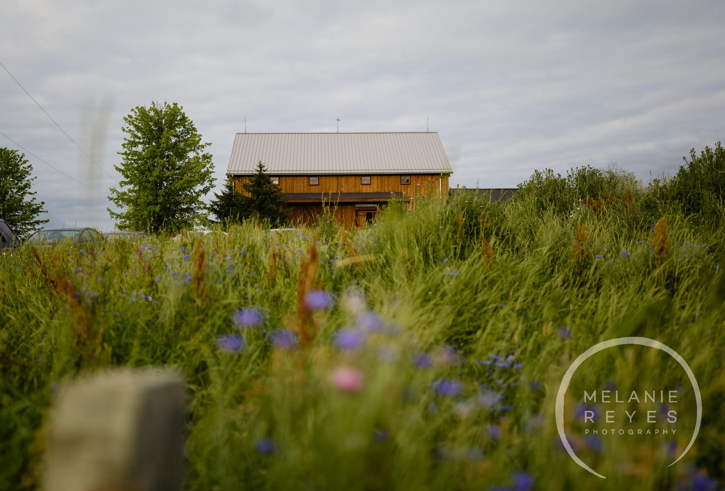 melaniereyesphotography_fruitg_farm_Misty-farm_wedding-9.jpg