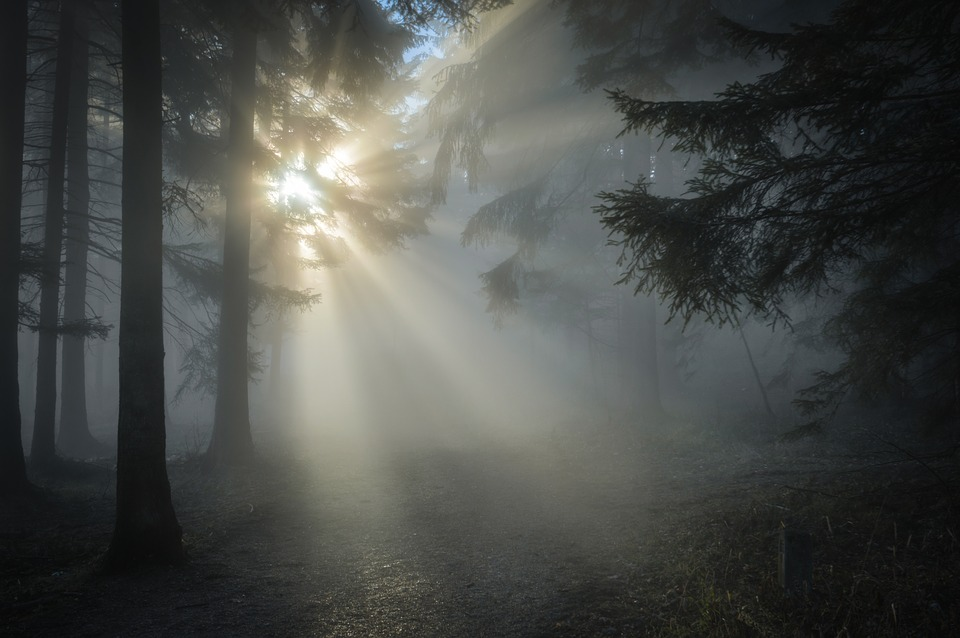 Photo of sun shining through dark forest trees.